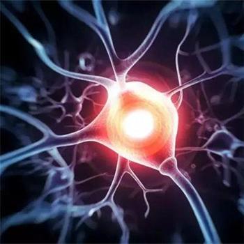 [氫學位]氫氣對主動脈瘤形成的抑制作用